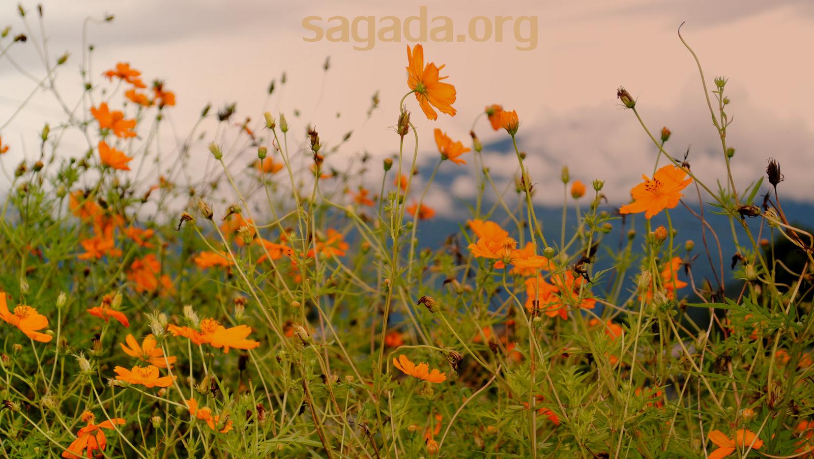 Balugan, Sagada: Flowers 2011