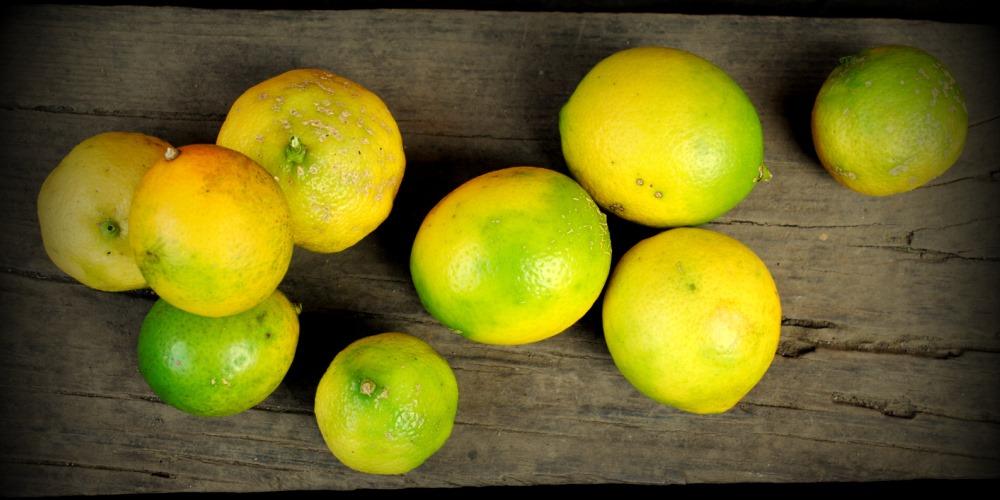 Sagada Lemon