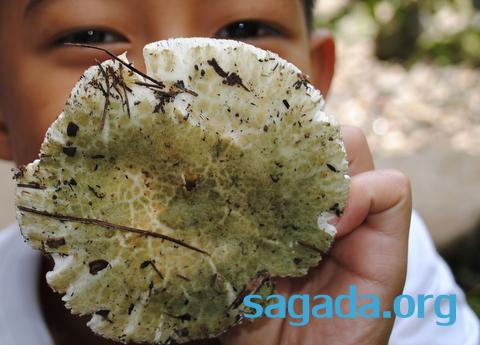 Sagada Mushroom Kaputan 004