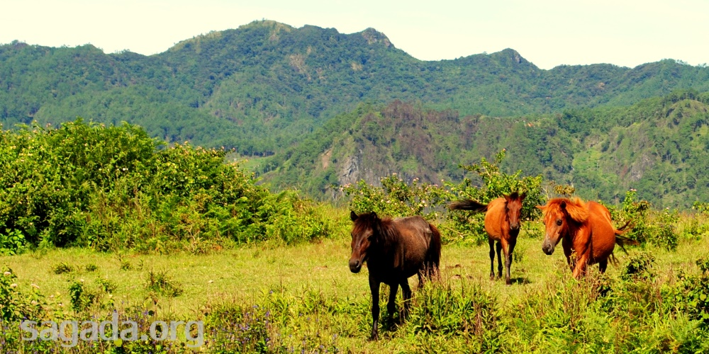 Sagada Flashback: Wild Horses